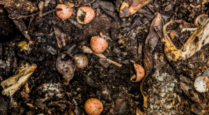 mmmm compost